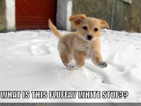 WHAT IS THIS FLUFFAY WHITE STUF??