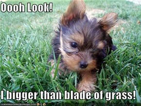 Oooh Look!  I bigger than blade of grass!