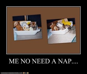 ME NO NEED A NAP....