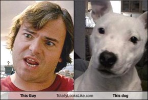 This Guy  Totally Looks Like This dog