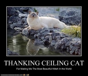 THANKING CEILING CAT