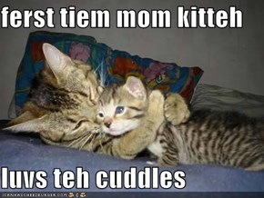 ferst tiem mom kitteh  luvs teh cuddles