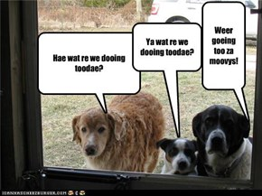 Bored Dogs/Puppys