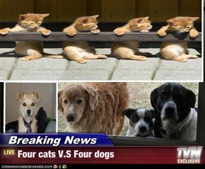 Breaking News - Four cats V.S Four dogs