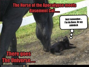 The Horse of the Apocalypse meets  Basement Cat......