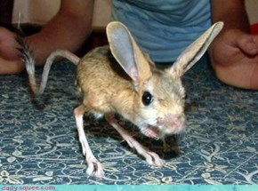 Whatsit Wendsday: Kangaroo Bunny Mouse