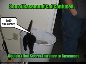 Son of Basement Cat Confused