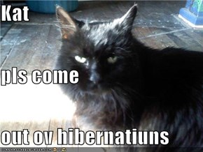 Kat pls come out ov hibernatiuns