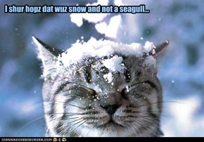 I shur hopz dat wuz snow and not a seagull...