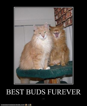 BEST BUDS FUREVER