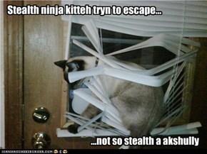 Stealth ninja kitteh tryn to escape...
