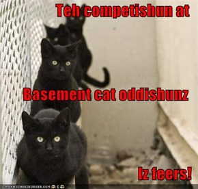 Teh competishun at Basement cat oddishunz Iz feers!