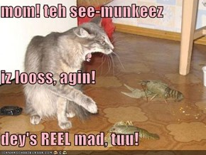 mom! teh see-munkeez iz looss, agin! dey's REEL mad, tuu!