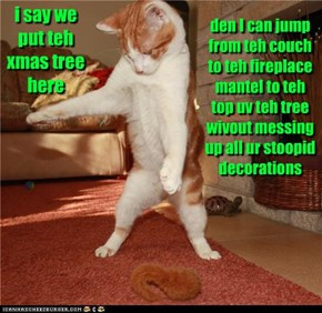 i say we put teh tree here
