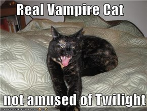 Real Vampire Cat   not amused of Twilight