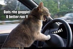 Dats rite goggie! U better run !!