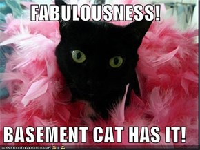 FABULOUSNESS!  BASEMENT CAT HAS IT!