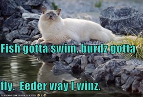 Fish gotta swim, burdz gotta  fly.  Eeder way I winz.