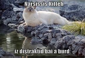 Narsissis Kitteh