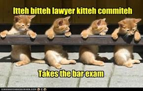 Itteh bitteh lawyer kitteh commiteh