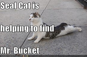 Seal Cat is helping to find Mr. Bucket