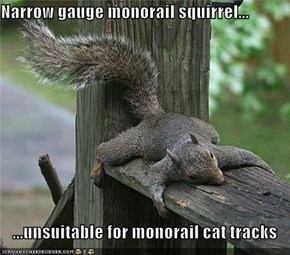 Narrow gauge monorail squirrel...  ...unsuitable for monorail cat tracks