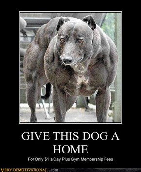 GIVE THIS DOG A HOME