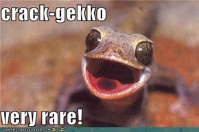 crack-gekko  very rare!