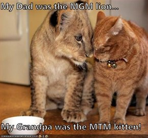 My Dad was the MGM lion...  My Grandpa was the MTM kitten!