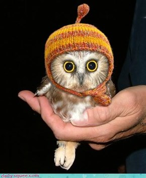 Adorable Owl in Knit Hat