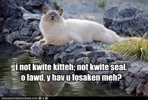 i not kwite kitteh; not kwite seal.   o lawd, y hav u fosaken meh?