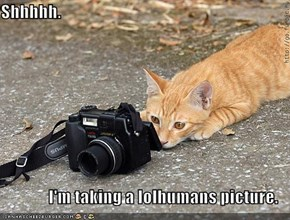 Shhhhh.  I'm taking a lolhumans picture.