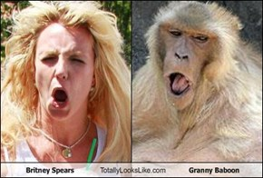 Britney Spears Totally Looks Like Granny Baboon