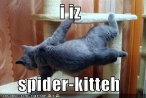 i iz   spider-kitteh
