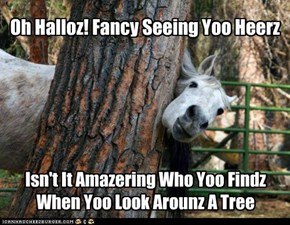 Yes horseh, it is amazering