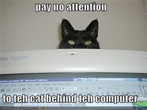 pay no attention  to teh cat behind teh computer