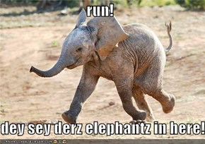 run!  dey sey derz elephantz in here!