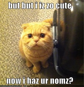 but but i iz zo cute  now i haz ur nomz?