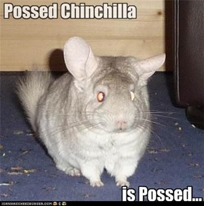 Possed Chincilla is Possed....