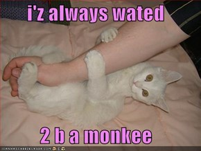 i'z always wated   2 b a monkee