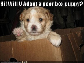 Hi! Will U Adopt a poor box puppy?