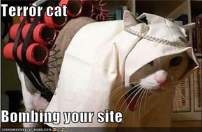Terror cat  Bombing your site
