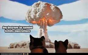 dog destroyer far exeeded kettehs expectaitions