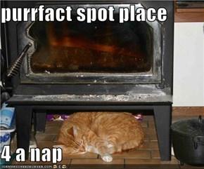 purrfact spot place  4 a nap