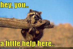 hey, you..  a little help here..