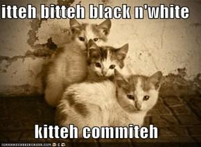 itteh bitteh black n'white   kitteh commiteh