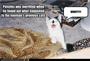 Patches was mortified when he found out what happened to the hooman's previous cats.