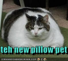 teh new pillow pet