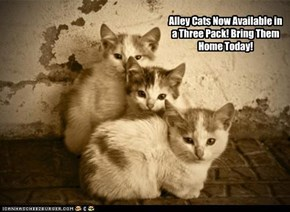 Alley Cats Now Available in a Three Pack!