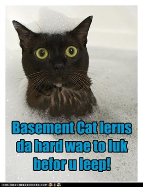 Basement Cat lerns da hard wae to luk befor u leep!